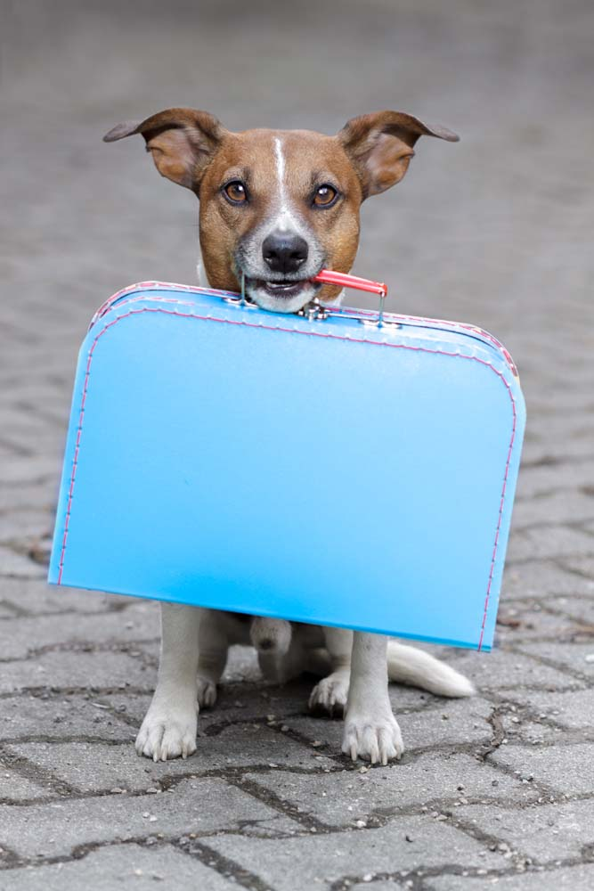 Island Trader Vacations Reviews Pet Friendly Destinations